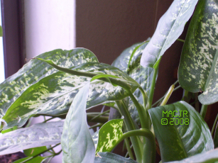 MACJR'S House Plants