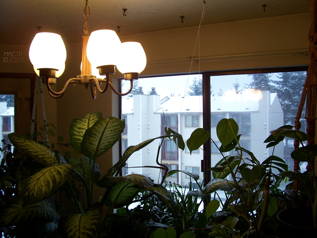 Tropic Snow, and other plants